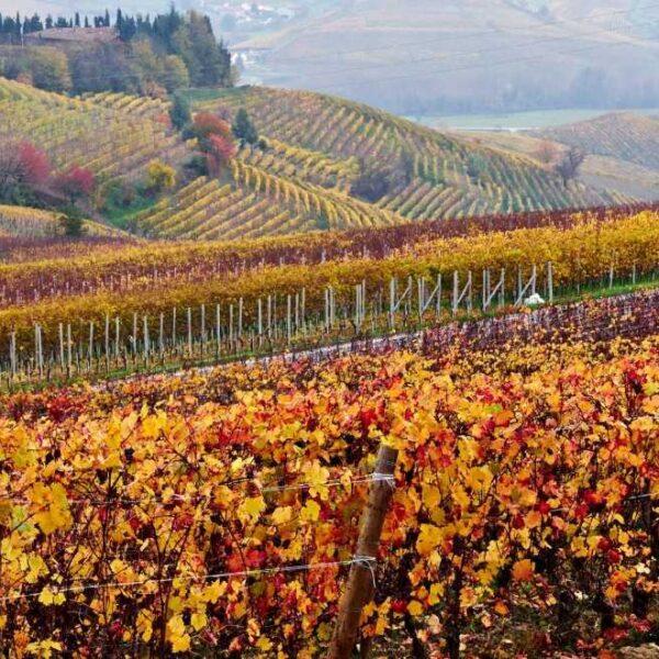 alpine_classic-autunno-colori-langhe-oilwineitaly